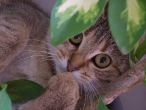 ma chatte dans les plantes